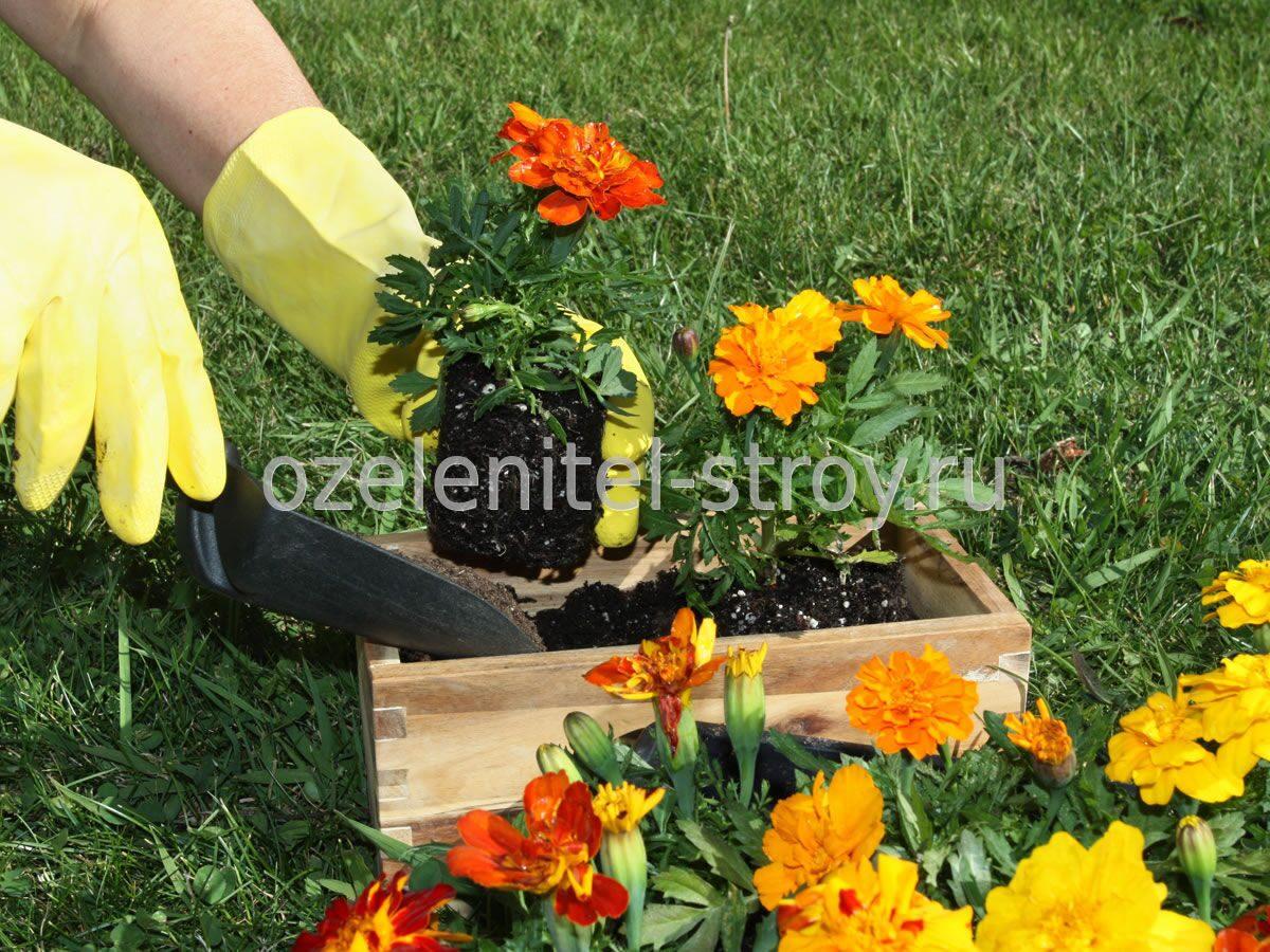 Фото цветов для посадки в саду