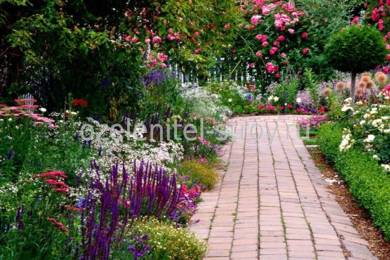 Цветы вдоль дорожки на даче фото