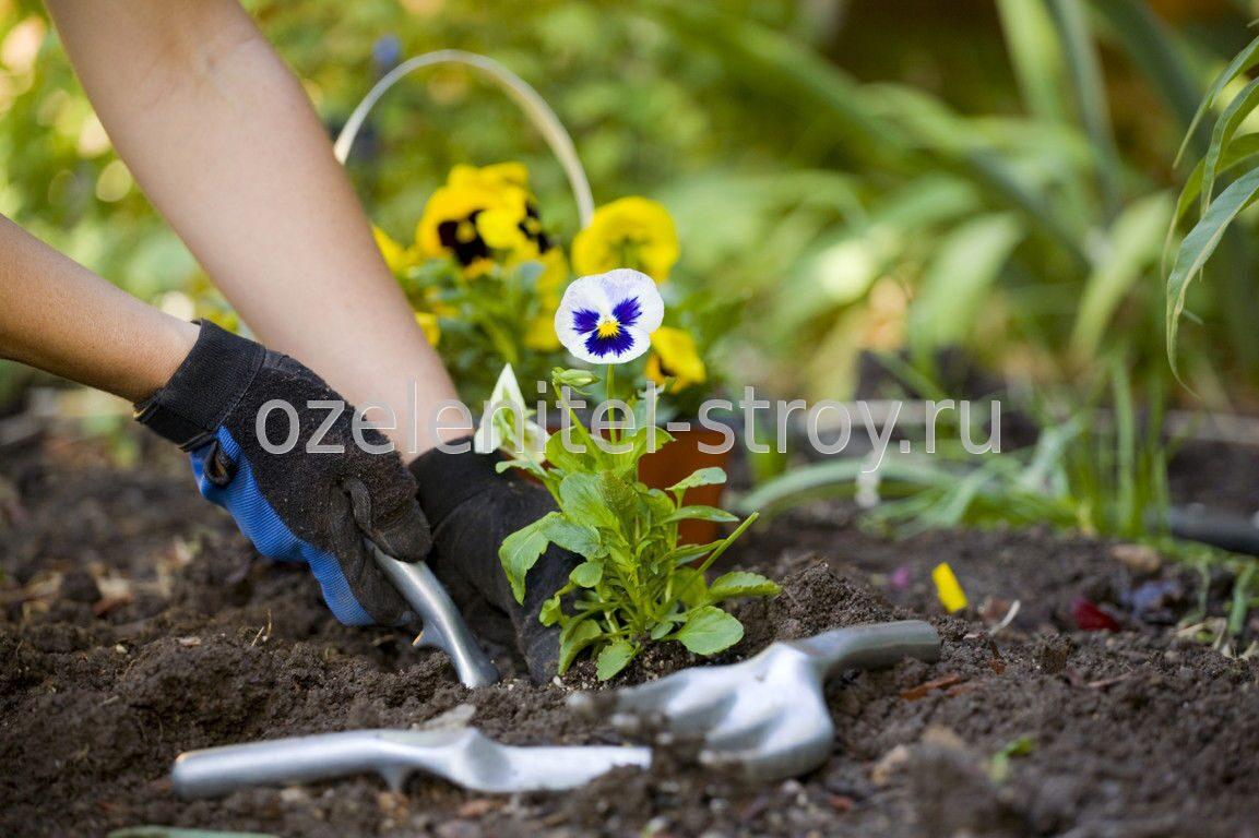 Посадка цветов в саду 18 фотография