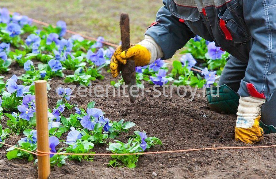 грозит цветы в грунт в апреле «За