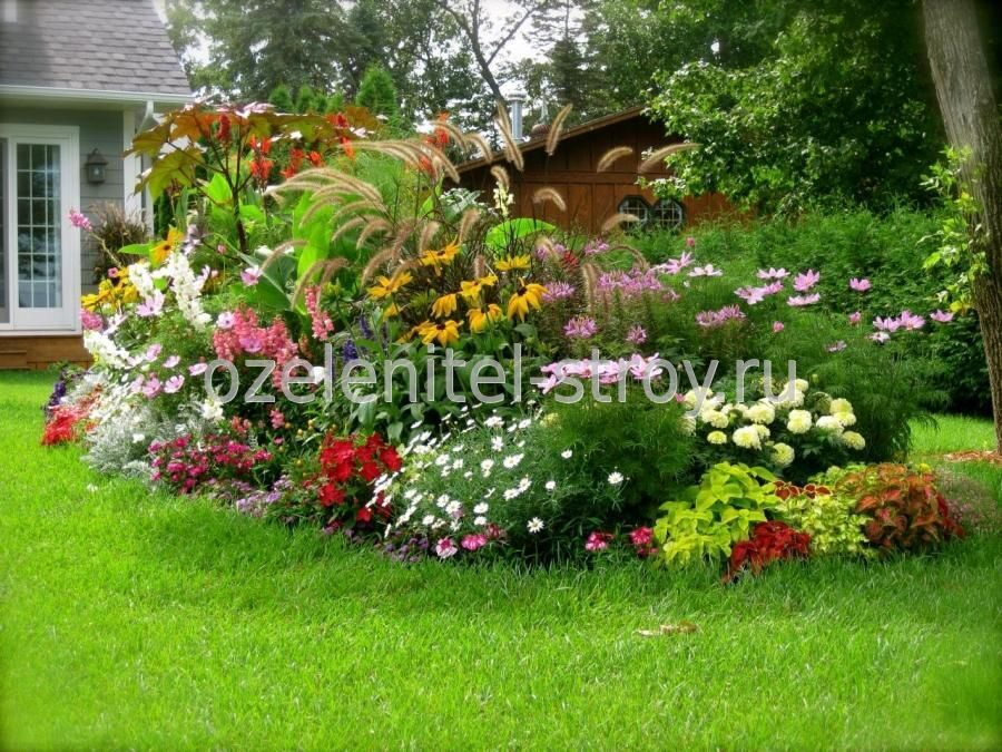Цветы дома и сада сокол контакт