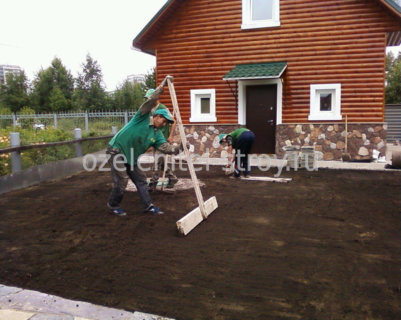 Как посадить газон на даче своими руками для ленивых