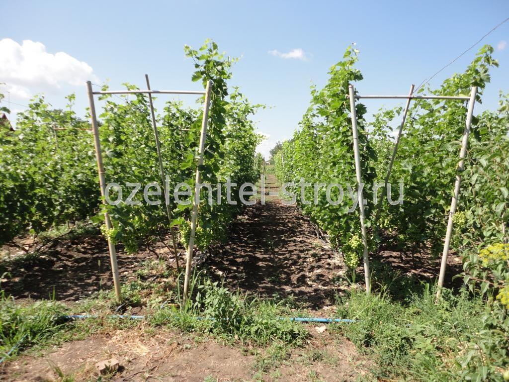 Красивая опора для винограда своими руками