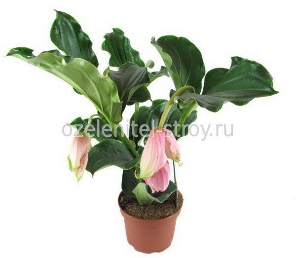 магазин горшечных растений: